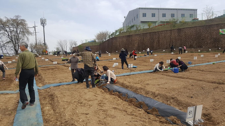대전시농업기술센터,행복농장(도시텃밭) 분양 친환경 도시농업에 도전해 보세요~