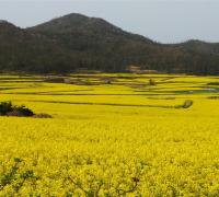 전라남도, 해양수산부, 봄꽃보다 아름다운 섬 7선